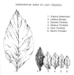 Oriental leaf comparison