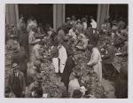 Inspecting of tobacco at Frascati aan de Nes in 1927