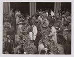 Inspecting of tobacco at Frascati aan de Nes in 1927