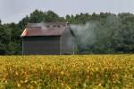 fire-cured-tobacco-barn